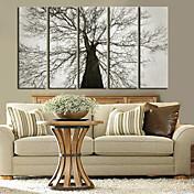 Reproducción en lienzo de arte botánico Old Tree Juego de 5