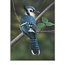 זול ציוד לבר-Photographic Blue Bird Roller Shade