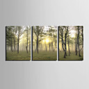 cheap Stretched Canvas Prints-E-HOME® Stretched Canvas Art Woods Decoration Painting  Set Of 3