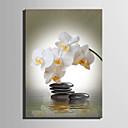 baratos Impressões-Botânico Impressão em tela Um Painel Pronto para pendurar , Vertical