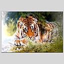 お買い得  動物画-ハング塗装油絵 手描きの - 動物 クラシック 近代の キャンバス
