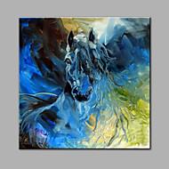 Ručno oslikana Sažetak Životinja Kvadrat,Moderna Jedna ploha Platno Hang oslikana uljanim bojama For Početna Dekoracija