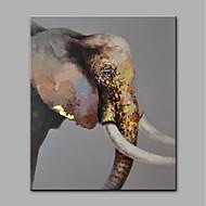 billiga Djurporträttmålningar-Hang målad oljemålning HANDMÅLAD - Djur Moderna Duk / Valsad duk