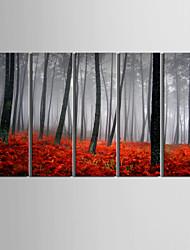 Недорогие -холст набор 5 ландшафта вырос лес закат натянутым холстом печати готов повесить