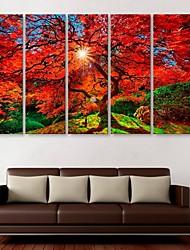 Недорогие -е-Home® растягивается холсте клен декоративной живописи набор из 5
