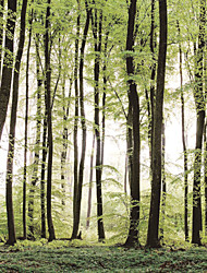 cheap -JAMMORY Trees/Leaves Wallpaper Contemporary Wall Covering,Canvas Large Mural Forest Trees