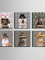 cheap -E-HOME® Stretched Canvas Art An Animal In A Hat Series Decoration Painting MINI SIZE One Pcs