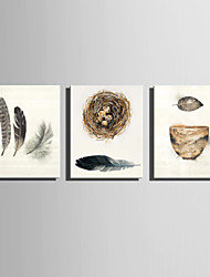 cheap -E-HOME Stretched Canvas Art Feather And Leaves The Nest Decoration Painting  Set Of 3