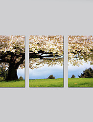 cheap -Stretched Canvas Print Floral/Botanical Modern Pastoral,Three Panels Horizontal Print Wall Decor For Home Decoration