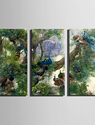 E-HOME Stretched Canvas Art Peacock Paradise Decoration Painting Set Of 3