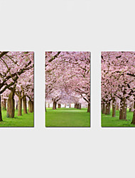 cheap -Stretched Canvas PrintThree Panels Canvas Horizontal Print Wall Decor For Home Decoration