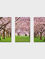economico -Stampe a tela Tre Pannelli Tela Orizzontale Stampa Decorazioni da parete For Decorazioni per la casa