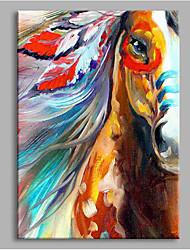 economico -appaloosa decorazione della parete dipinti a mano dipinti ad olio contemporanei opere d'arte moderna arte della parete