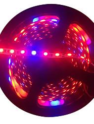 economico -5m Lampade a striscia crescente 300 LED 5050 SMD Rosso / Blu Accorciabile / Auto-adesivo 12 V 1pc
