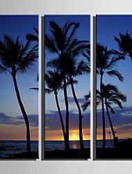 Недорогие -С картинкой Роликовые холсты Отпечатки на холсте - Пляж Пейзаж Modern 3 панели