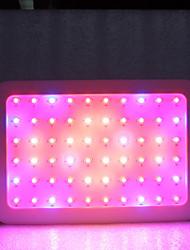 Недорогие -1 комплект 600 W 6000 lm 60 Светодиодные бусины Полного спектра Растущие светильники Тёплый белый Белый Красный 85-265 V Деловой Дом / офис