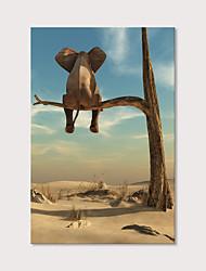 Недорогие -С картинкой Отпечатки на холсте - Животные Фото Modern Репродукции