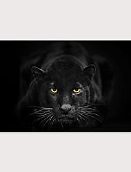 Недорогие -С картинкой Отпечатки на холсте - Животные Фото Modern