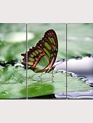 abordables -Imprimé Impression sur Toile - Animaux Moderne Traditionnel Trois Panneaux