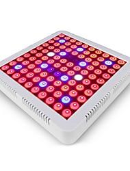 Недорогие -AcStar 1 комплект 100 W 600 lm 100 Светодиодные бусины Полного спектра Для парниковых гидропоники Растущие светильники Белый Красный Синий 85-265 V Овощеводство