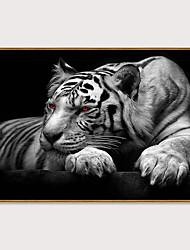 Недорогие -Отпечаток в раме Набор в раме - Животные Поп-арт Полистирен Фотографии Предметы искусства