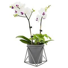 billige Kunstige blomster-Kunstige blomster 1 Gren Klassisk Moderne Moderne Vase Gulvblomst