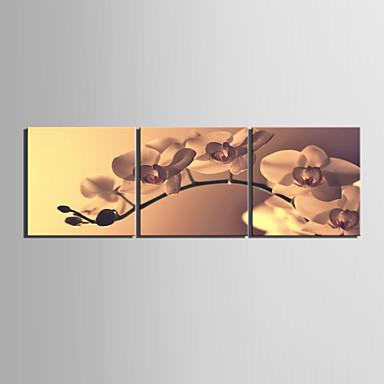 Protezala Canvas Art Cvjetni Natječaj Orhideja Set od 3