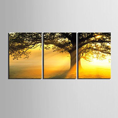 E-HOME® Stretched Canvas Art Sunset Under The Tree Decorative Painting Set of 3
