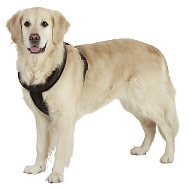 Gato Cachorro Arreios Reflector Portátil Respirável Segurança Ajustável Sólido Náilon Preto Vermelho Azul