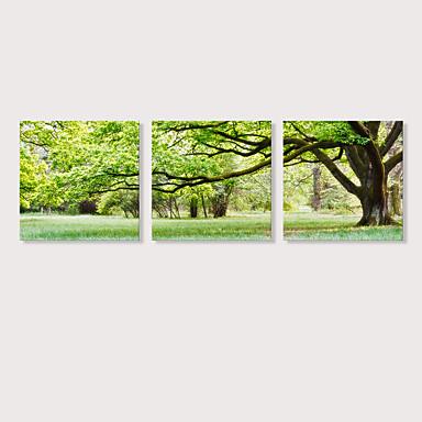billige Trykk-Trykk Strukket Lerret Trykk - Still Life Fotografisk Moderne Tre Paneler Kunsttrykk